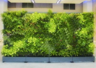 Cadres et murs végétaux 16