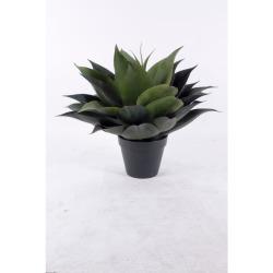 Agave vert H 55 cm