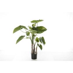 Alocasia calidora H 120 cm