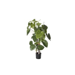 Alocasia calidora H 170 cm