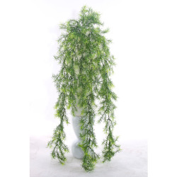 Asparagus sans pot 80 cm