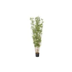 Bambou fin tige 210 cm