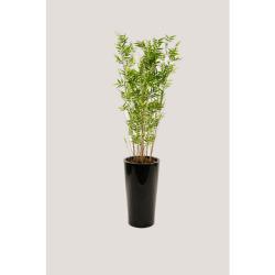 Bambou fin tige dans un pot noir 50 x 50 x 210 cm