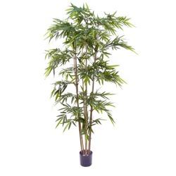 Bambou japonica 240 cm