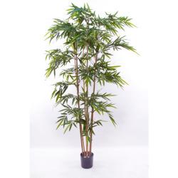 Bambou japonica 270 cm