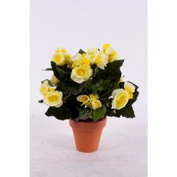 Begonia Elatior jaune dans un pot d'ar 30 cm