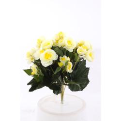 Begonia Elatior jaune sans pot 30 cm