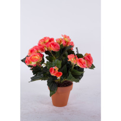 Begonia Elatior orange dans un pot d'a 30 cm