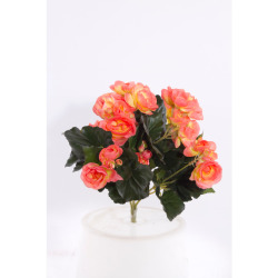 Begonia Elatior orange sans pot 30 cm
