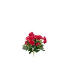 Begonia Elatior rouge sans pot 30 cm