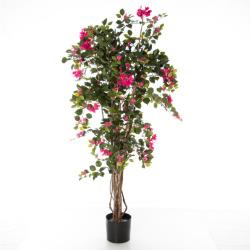 Bougainvilliers rose 130 cm