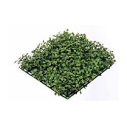 Buxus tapis vert 25 x 25 x 5 cm