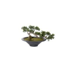 Cèdre Bonsai 74 x 32 x 40 cm