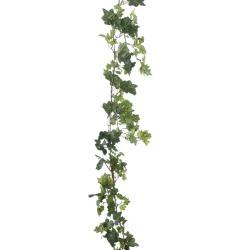 Cissus Guirlande verte 180 cm
