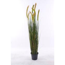 Cordaderia brun-vert D 28 cm, H 123 cm