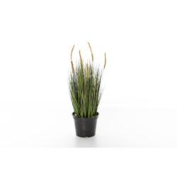 Cordaderia brun-vert D 28 cm, H 61 cm
