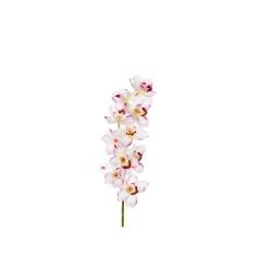 Cybidium blanc rose 91 cm