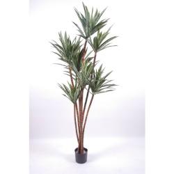 Dracaena deremensis H 120 cm