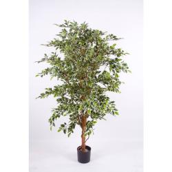 Ficus benj. panaché H 140 cm