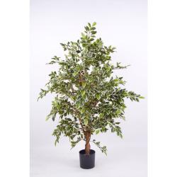 Ficus benj. panaché H 170 cm