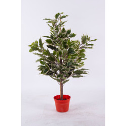 Ficus exotica tronc panaché H 60 cm