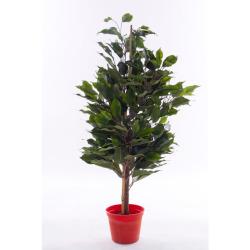 Ficus exotica tronc vert H 60 cm