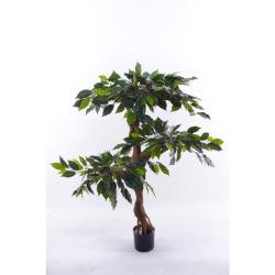 Ficus tronc tordu H 120 cm