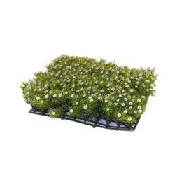 Fleurs tapis blanc 25 x 25 x 5 cm