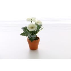 Gerbera blanc dans un pot d'argile 25 cm