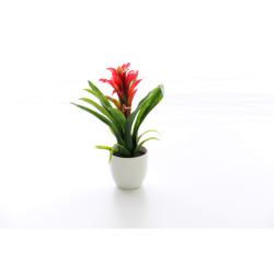 Guzmania rouge 30 cm