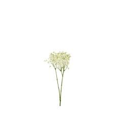 Gypsophilla crème 63 cm