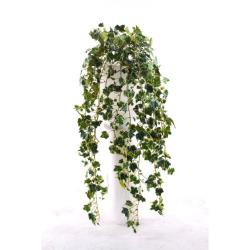 Hedera panaché sans pot L 80 cm
