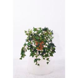 Hedera vert dans un pot d'argile 25 cm