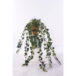 Hedera vert dans un pot d'argile 80 cm