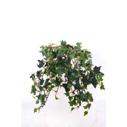 Hedera vert sans pot 25 cm