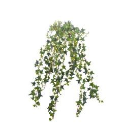 Hedera vert sans pot 50 cm