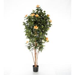 Hibiscus orange- jaune 180 cm