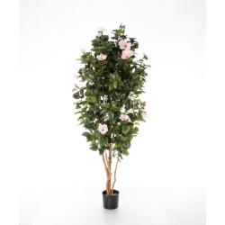 Hibiscus rose 180 cm