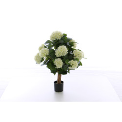 Hydrangea creme 68 cm