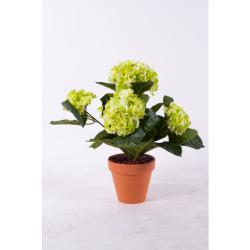 Hydrangea vert-blanc dans un pot d'arg 40 cm