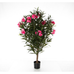 Lauriers roses 140 cm