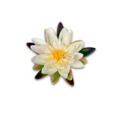 Nénuphar crème flottant 12.5 cm