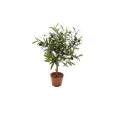 Olivier avec des olives 46 cm