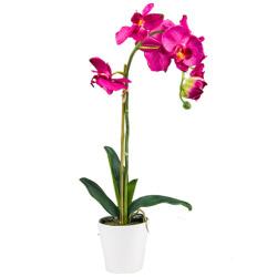 Orchidée beauty dans un pot en céramiq H 65 cm