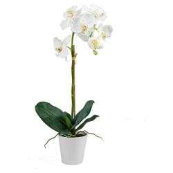 Orchidée blanche dans un pot en cérami H 65 cm