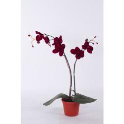 Orchidée pourpre 55 cm