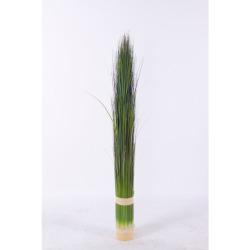 Pennisetum vert clair L 73 cm