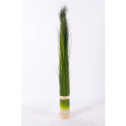 Pennisetum vert foncé L 73 cm