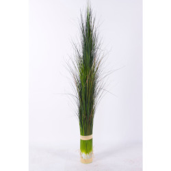 Pennisetum vert foncé L 92 cm