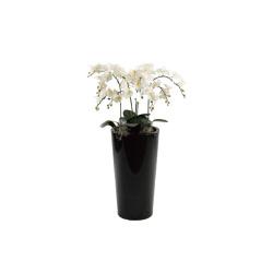Phalaenopsis blanc dans un pot noir 70x70x160cm